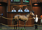 Rockport Harbor Filly Tops OBS June Session