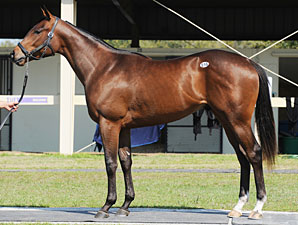 Repole Buys $325,000 Indian Charlie Colt