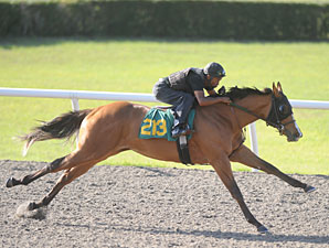 Indian Charlie Filly Dazzles in OBS Preview