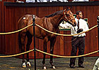 Malibu Moon Colt Brings $1.3 Million at OBS