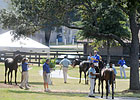 OBS Fall Sale Starts Two-Day Run Oct. 19