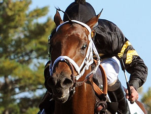 Optimizer Tunes Up For Arkansas Derby