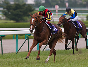 Orfevre Returns to Form With Hanshin Victory