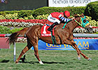 Parranda Seeks More Gulf Glory in Honey Fox
