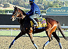 WinStar Farm Sets 2014 Stud Fees