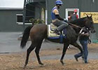 Preakness News Update for May 15, 2014