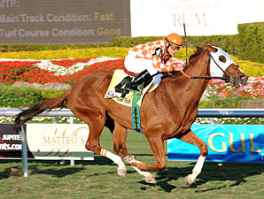 Presious Passion Leads Sheema Classic Cast