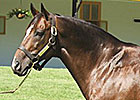 Claiborne Stallion Pulpit Dies