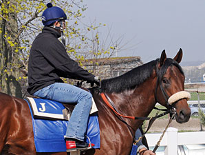 Quality Road Jogs, Jerkens Still Confident