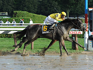 Quick Wit Prevails in Off-Turf Hall of Fame