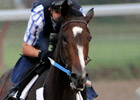 Rachel Alexandra, Papa Clem in Haskell Works