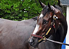 No Breeders' Cup for Rachel Alexandra