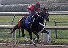 Rachel in First Work Since Fleur de Lis Romp