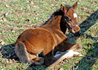 Video: Rachel Alexandra's First Foal