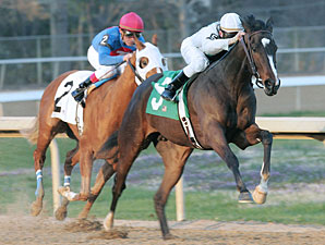 FG Oaks: 'Alexandra to Face Short Field