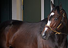 Preakness Starters Opt for Indoor Paddock
