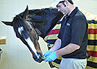 Rachel Alexandra Goes for Short Walk