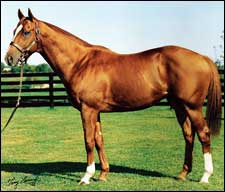 Rahy is Rising Broodmare Sire of Sires