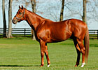 Red Giant to Three Chimneys for 2010