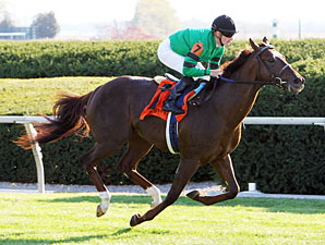 Rogue Romance Made Favorite for Risen Star