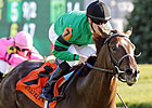 Rogue Romance to Run in BC Juvenile