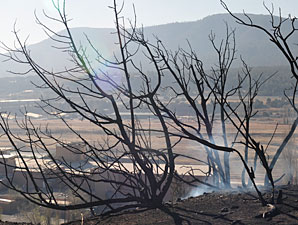 Wildfire Causes Little Damage at Ruidoso