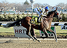 Salutos Amigos Adds Gravesend Stakes Victory