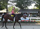 Saratoga Diary: Mornings on the Backstretch