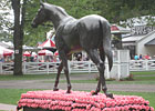 Saratoga Diary: Pink and Rosie