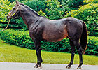 The Continuing Impact of Seattle Slew