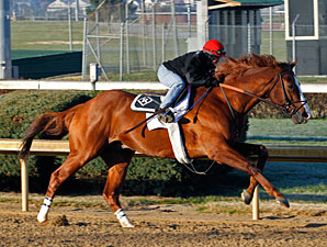 Shackleford Aims to Go Out On Top in Clark