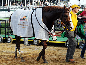 Film Series to Lead Up to Preakness