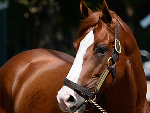 Shackleford's Fee Set at $20,000