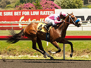 She's a Tiger, Alpine Luck Win at Hollywood