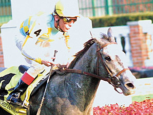 Grade II Winner Snow Dance Euthanized