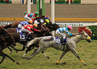 Snow Dragon Shocks Japan's Sprinters Stakes
