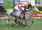 Graded Winner Snow Top Mountain Retired