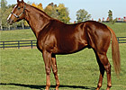 First U.S. Winner for Freshman Sire Soto