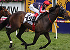 Southern Speed Solid Winner of Caulfield Cup