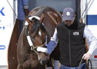 Stay Thirsty, Shackleford Arrive at Churchill