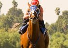 Summer Bird Works Between Races at Oak Tree