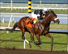 Sun King Overwhelming Choice in Tampa Bay Derby