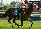 41-1 Surtsey Lights Up Tote in Ontario Damsel