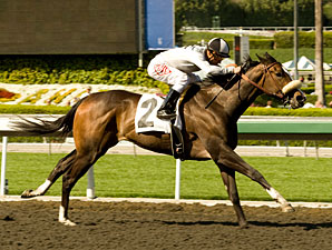 Tanda Heads 10 Fillies Set for Railbird