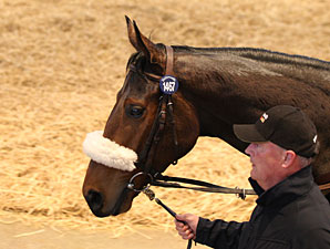 Tattersalls Sale Ends With Solid Median