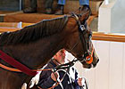 Measuring Time Tops Tattersalls Session