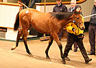 Strong Opening Day of Tattersalls Foal Sale