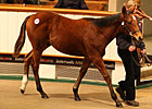 Tattersalls Foal Sale Begins on Upward Note