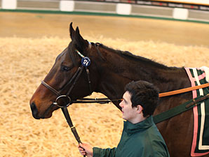 Tattersalls February Sale Enjoys Upswings