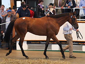 Seitz Buys Tattersalls Sale Topper